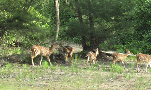 Deer- Nuanai Nature Camp