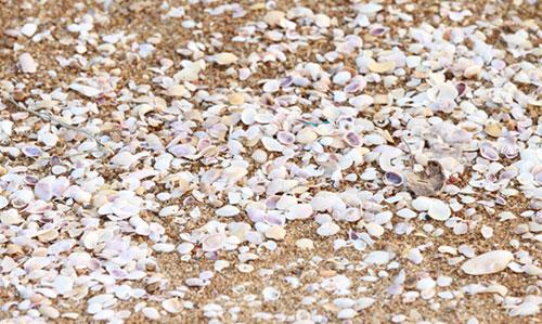 Shell sand