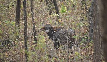 Debrigarh Wildlife