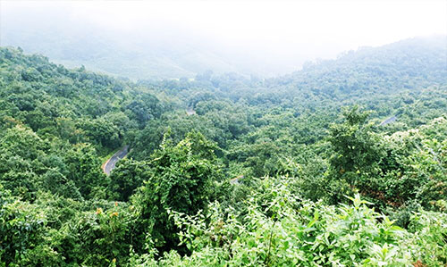 belghar forest