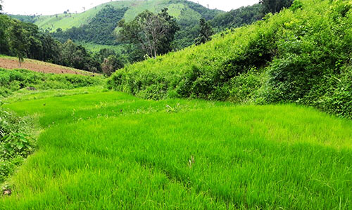 belghar nature