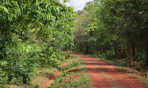 Chandaka-Dampara Wildlife Sanctuary