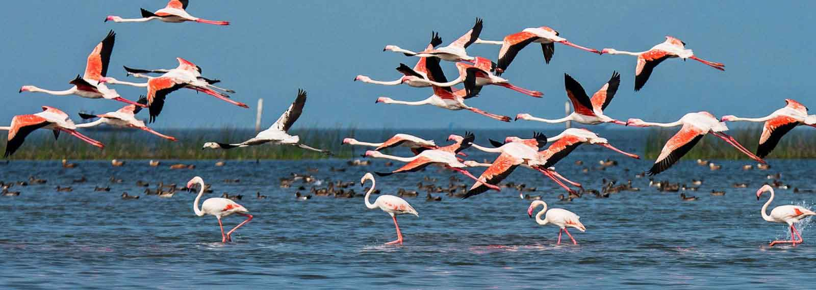 birds in chilika