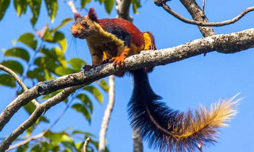 Giant Squirrel Nature Camp
