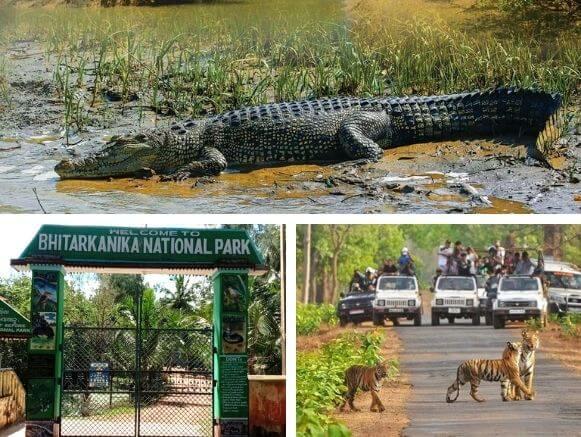 Odisha-Wildlife-Tour