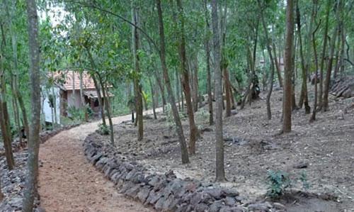 Olasuni Nature Camp