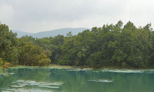 Rissia Nature Camp