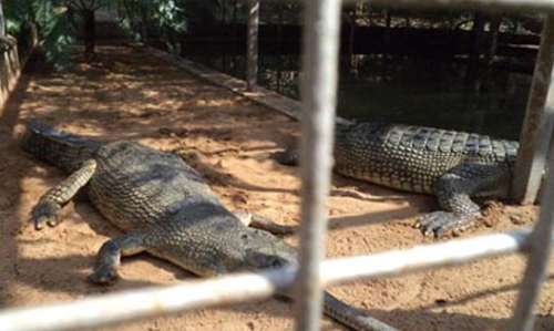 Gharial Research and Conservation Unit (GRACU) in Tikarpada