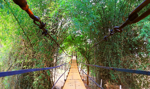 Canopy walkway/Tree Walk in Satkosia Sands Resort