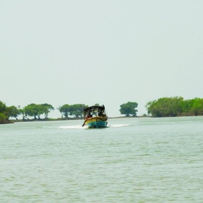 Bichitrapur Mangroves