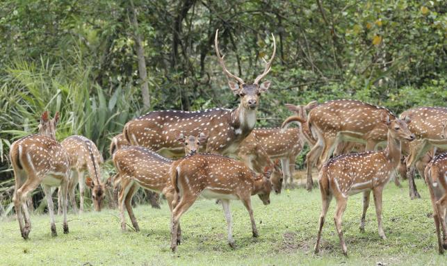 Bhitarakanika Wildlife Tour Gallery 1