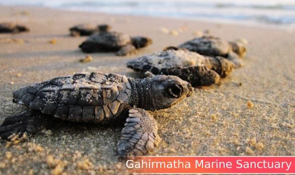 2. GAHIRMATHA MARINE SANCTUARY