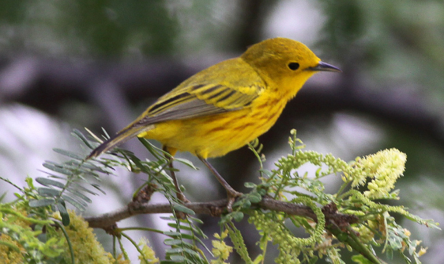 Paradise Of Migratory Birds Tour Gallery 1