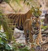 Odisha Eco Tours