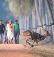 Gigantic Wildlife In Odisha Tour