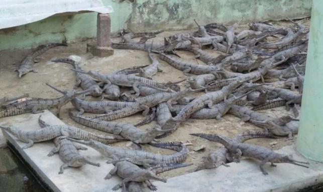 Odisha Wildlife Tour Gallery 1