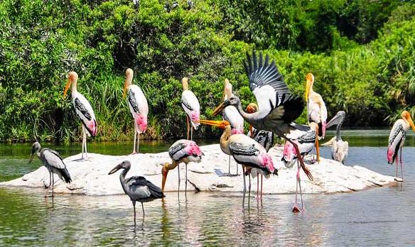 Odisha Unforgettable Honeymoon Package Tour Gallery 2