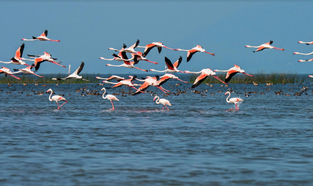 Chilika Tour Gallery 2