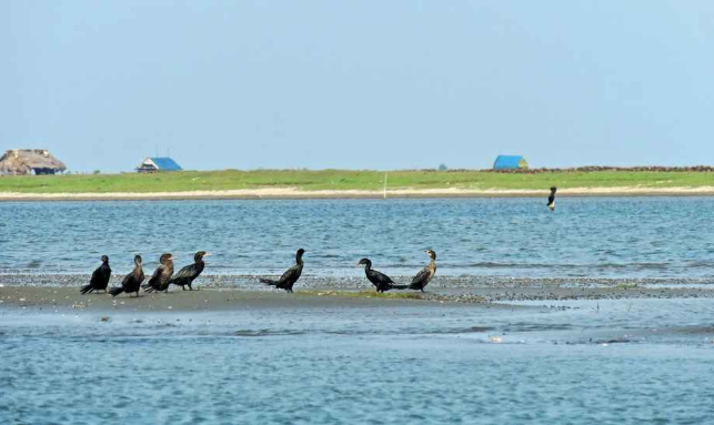Chilika Tour Gallery 3