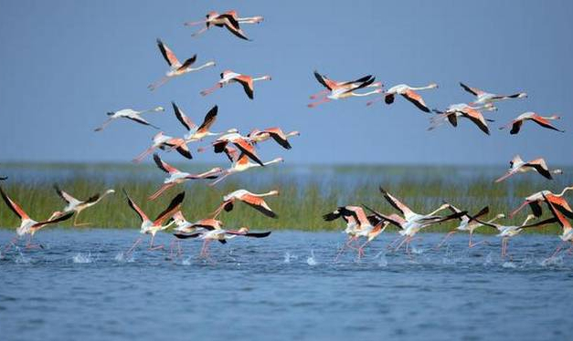Dream Destination Chilika Tour Gallery 2
