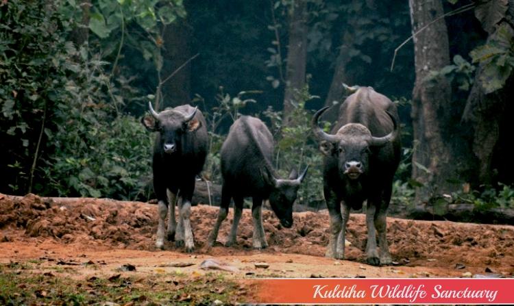 11. KULDIHA WILDLIFE SANCTUARY