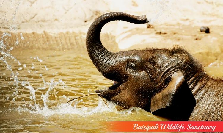 15. BAISIPALI WILDLIFE SANCTUARY