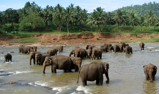 Special Sri Lanka Family Tour: Yala, Bentota And Colombo Gallery 2