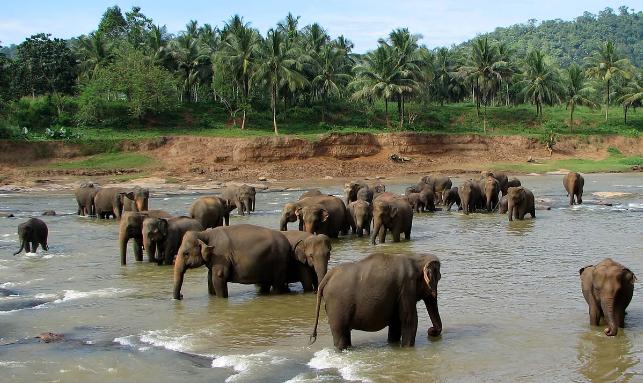 Joyous Sri Lanka Family Package Gallery 3