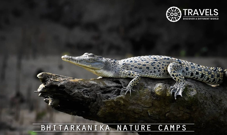 1. Bhitarkanika Nature Camps