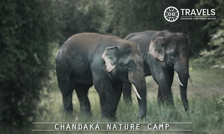 2. Chandaka Nature Camp