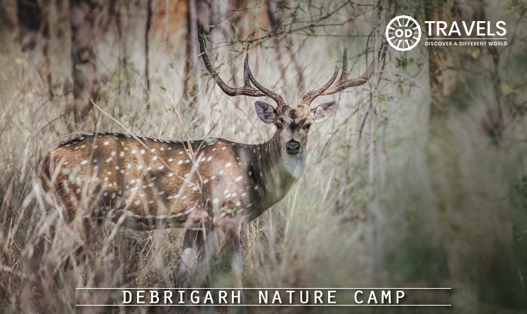 3. Debrigarh Nature Camp