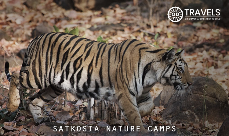 4. Satkosia Nature Camps