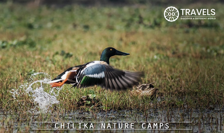 5. Chilika Nature Camps