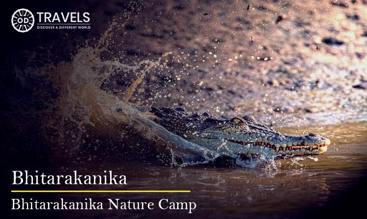 Bhitarakanika Nature Camp